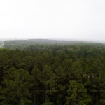 View from the Flat Rock Fire Tower.